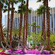 Beautiful Landscaping with Palms at the Tropicana Hotel and Casino in Las Vegas, NV.