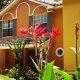Best Western Premier Saratoga Villas flowers