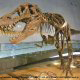 Explore the 14 foot long skeleton of T-Rex at the Dinosaur Museum in Branson, Missouri.