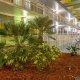 Champions World Resort palmeto bush