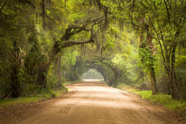 Charleston SC Dirt Road Forest Botany Bay Plantation Spanish Moss