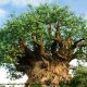 Majestic old tree greets vacation guests at Disney\'s Animal Kingdom in Orlando, Florida.