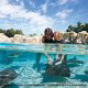 Dolphin Play at Hilton Garden Inn Orlando at SeaWorld in Orlando, Florida. Your children will have a great time here during your Summer Break Vacation Special.
