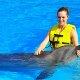 Island Palm Resort dolphin