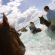 Island Palm Resort horseback riding