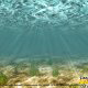 Underwater view of Ripley\'s Aquarium in Myrtle Beach South Carolina.
