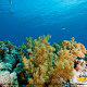 Coral Reef at Ripley\'s Aquarium in Myrtle Beach South Carolina.