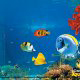 Tropical fish and reef fish at Ripleys Aquarium in Pigeon Forge, Tennessee.