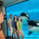 Killer whales clowing around for a photo shoot during summer vacation to Seaworld in Orlando, Florida.