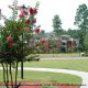 Crepe Myrtles adorn the landscaping at the Wild Wing Resort in Myrtle Beach South Carolina.